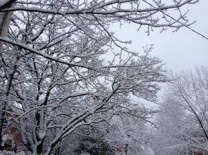 Winter, somewhere near Ottawa, Canada. © Saara Punjani 2013.