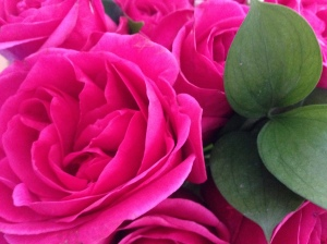 Pink roses. © Saara Punjani 2014.