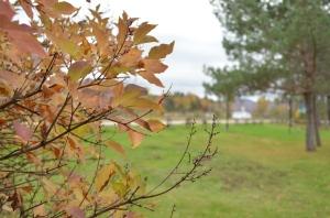 Autumn, somewhere near Mont-Tremblant, QC.  © Asif Virani, 2014.
